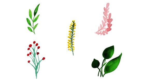 水彩花卉叶子矢量素材(EPS/PNG)