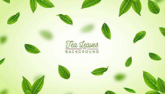 逼真的清新茶叶矢量素材(EPS/AI)