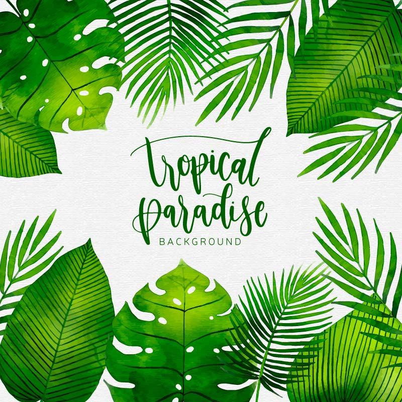 水彩热带植物背景矢量素材(EPS/AI/免扣PNG)