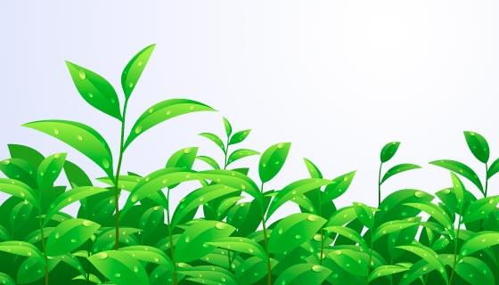 逼真的茶叶矢量素材(EPS/AI)