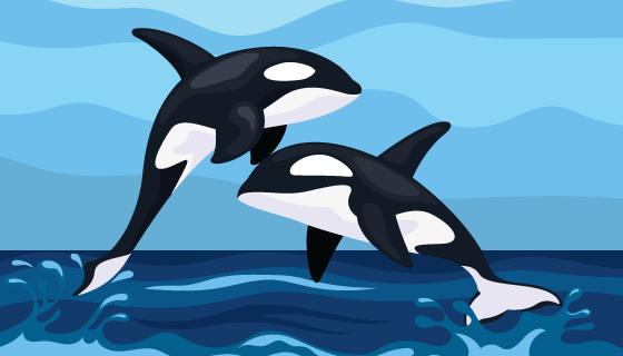 跳出海面的虎鲸矢量素材(EPS/SVG)