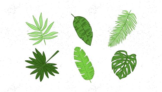 热带树叶集合矢量素材(EPS/AI/PNG)