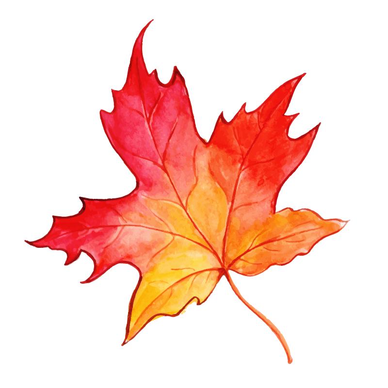 漂亮的水彩秋叶矢量素材(EPS/免扣PNG)