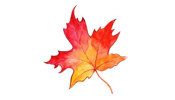 漂亮的水彩秋叶矢量素材(EPS/PNG)
