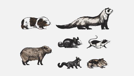手绘风格动物矢量素材(EPS/PNG)