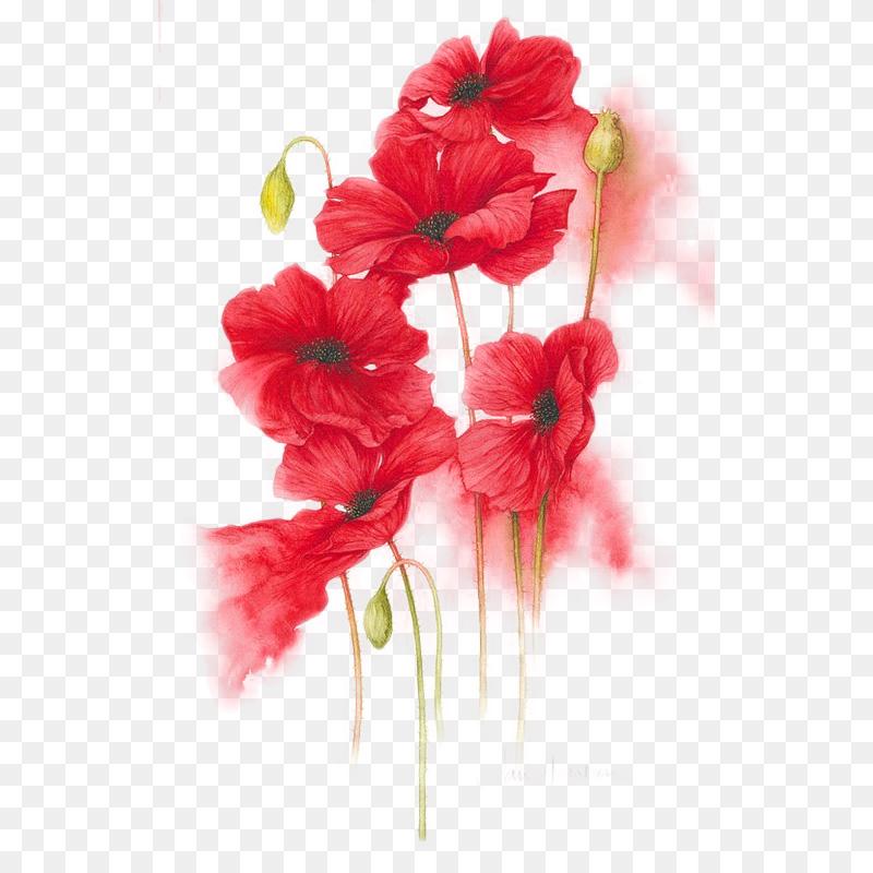 手绘红色花卉(免扣PNG)
