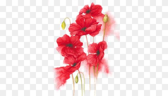 手绘红色花卉(PNG)