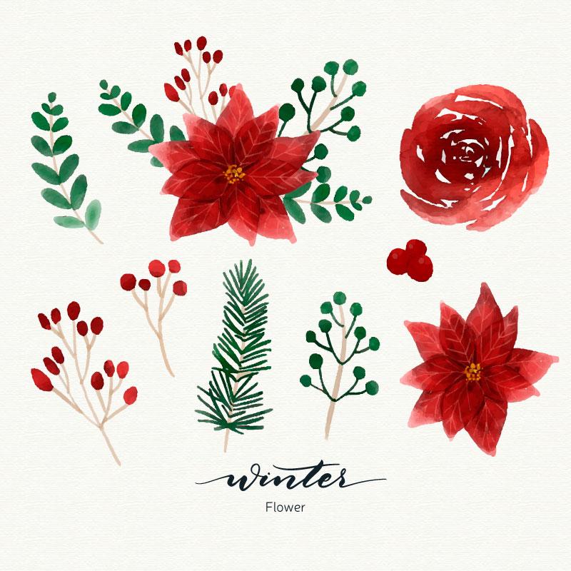 漂亮的水彩冬季花卉矢量素材(EPS/AI/免扣PNG)