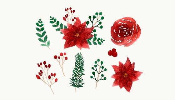 漂亮的水彩冬季花卉矢量素材(EPS/AI/PNG)