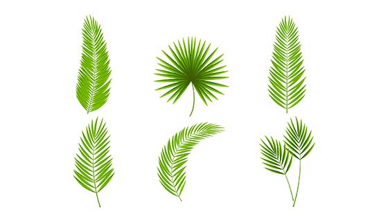 棕榈叶包装矢量素材(EPS/AI)