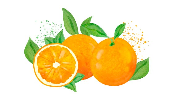 水彩风格的橙子矢量素材(AI/EPS/PNG)