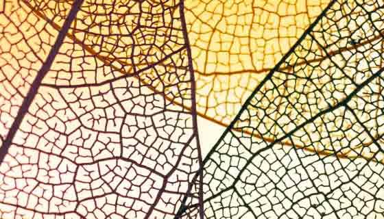 抽象透明黄色叶子素材(JPG)