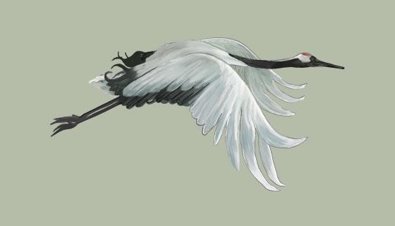 飞翔的白鹤矢量素材(EPS/PNG)