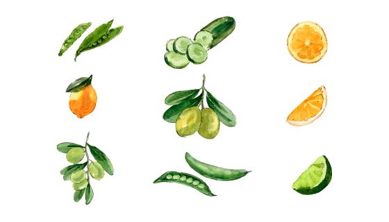 水彩风格蔬菜水果矢量素材(EPS/PNG)