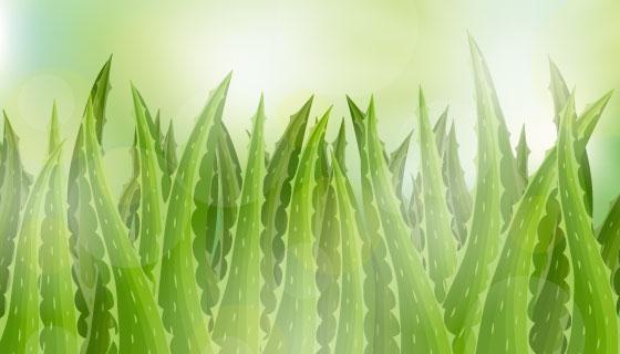 芦荟植物背景矢量素材(EPS/AI)