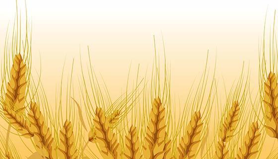金黄色的小麦背景矢量素材(EPS)