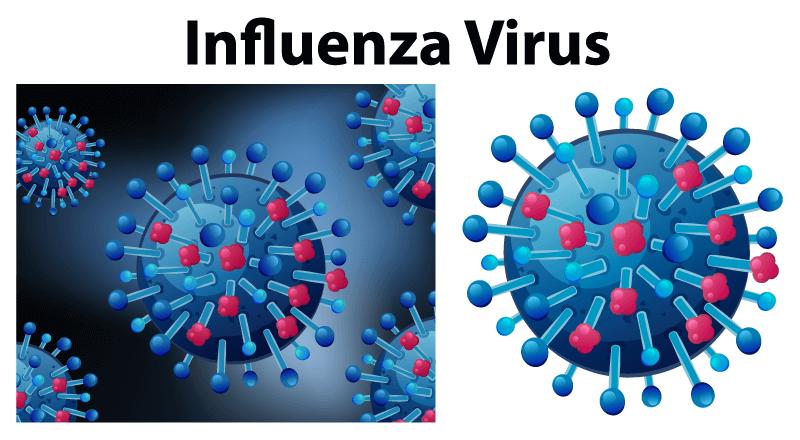 流感病毒放大显示矢量素材(EPS)