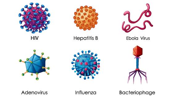 六种病毒放大显示矢量素材(EPS/PNG)