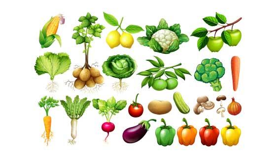 各种各样逼真的蔬菜矢量素材(EPS/PNG)