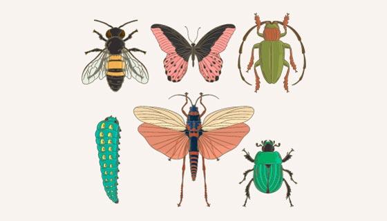 六种手绘风格昆虫矢量素材(AI/EPS/PNG)