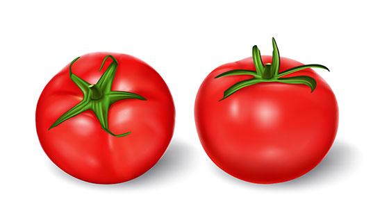 逼真的西红柿矢量素材(EPS)