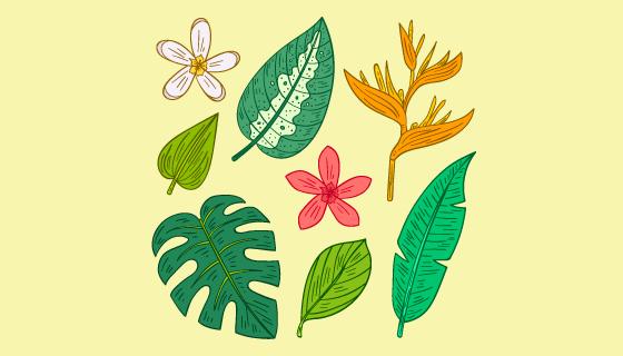 热带花朵叶子矢量素材(AI/EPS/PNG)