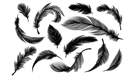逼真的黑色羽毛矢量素材(EPS/PNG)