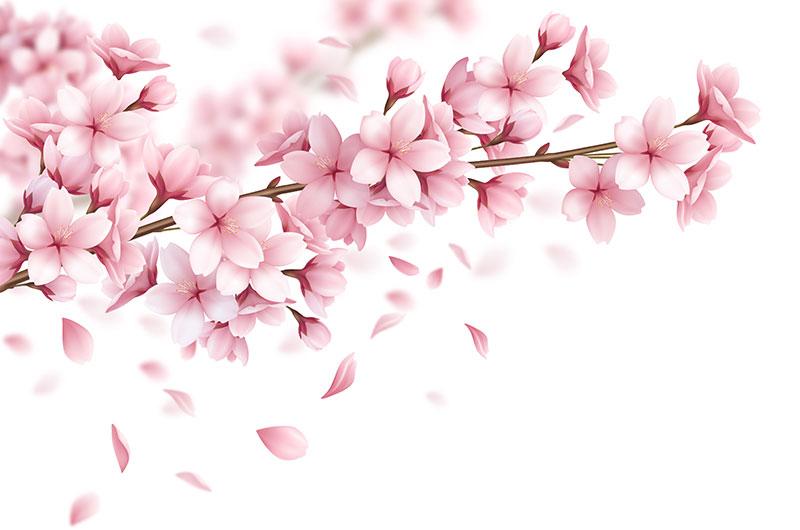 逼真漂亮的樱花矢量素材(EPS)