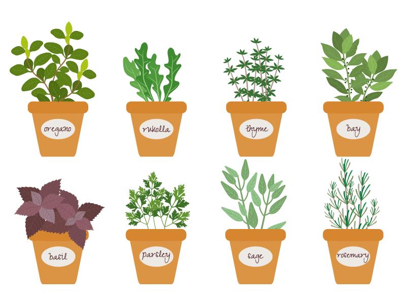 8个扁平风格的草药盆栽矢量素材(EPS/免扣PNG)