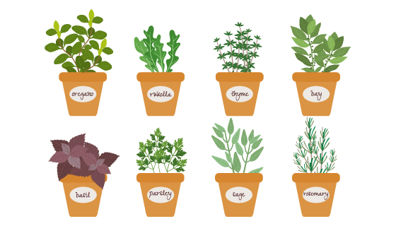 8个扁平风格的草药盆栽矢量素材(EPS/PNG)