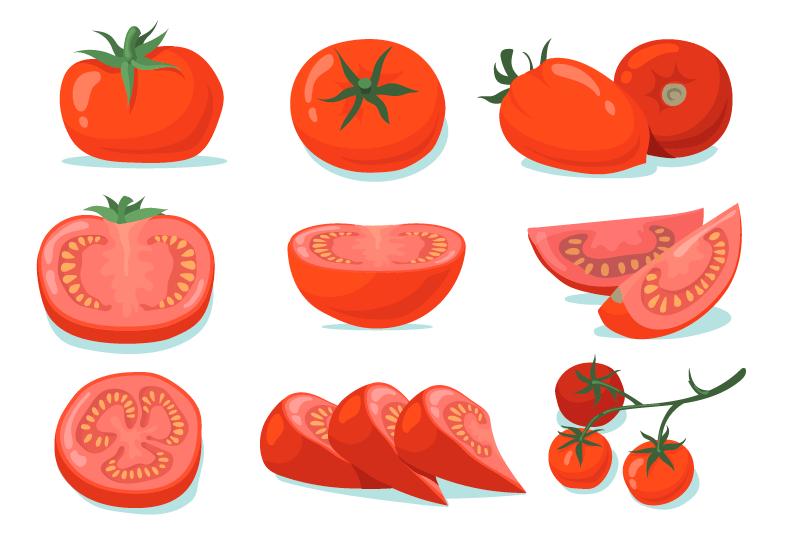 新鲜的西红柿矢量素材(EPS/免扣PNG)
