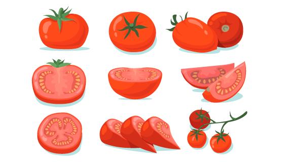 新鲜的西红柿矢量素材(EPS/PNG)