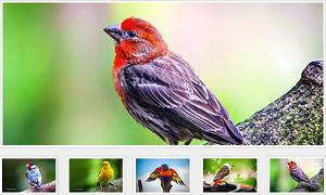 简单的jQuery图片相册插件simpleGal