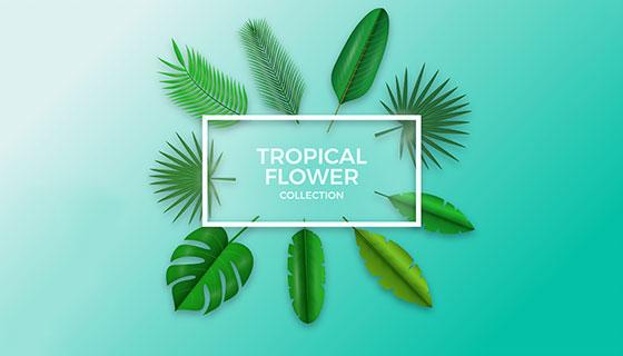 9款热带植物叶子矢量素材(EPS/AI)