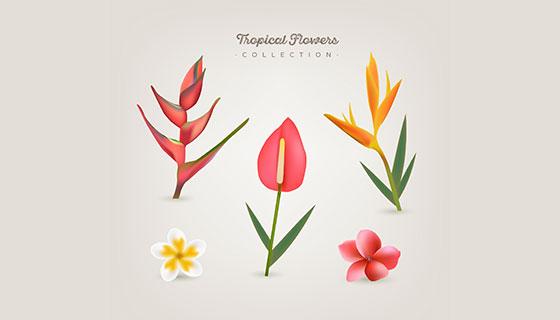 多彩热带花卉矢量素材(EPS/AI)