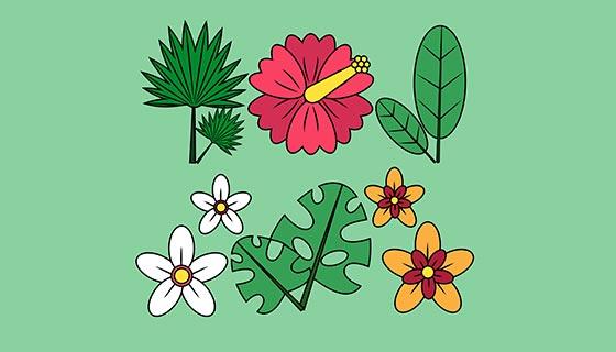 6款漂亮的热带花卉矢量素材(EPS/AI)