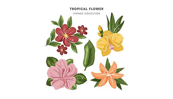 热带花卉图案矢量素材(EPS/AI)