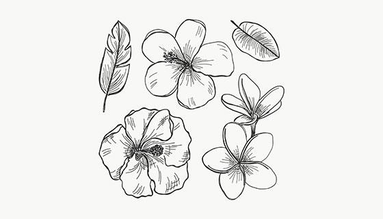 手绘花卉矢量素材(EPS/AI)