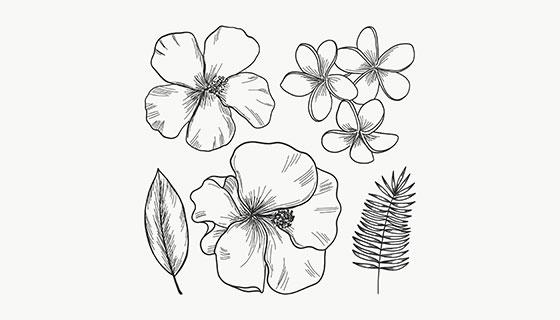 手绘热带花卉矢量素材(EPS/AI)