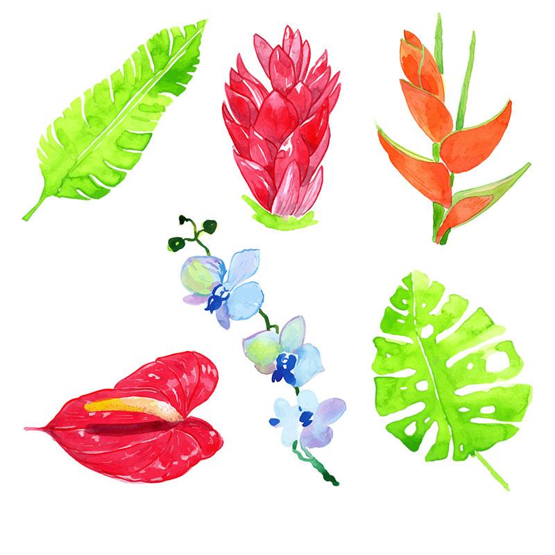 水彩热带花卉矢量素材(EPS/AI)